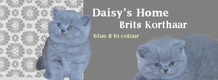 Cattery Daisy´s Home.